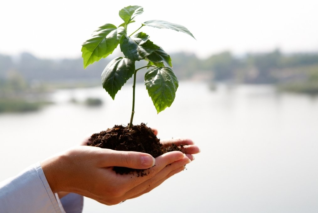 Hands holding growing plant. Personal Growth